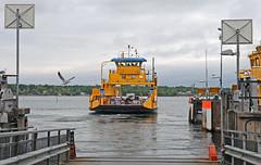 Öregrund færge (peter.velthoen) Tags: öregrundfærge öregrund færge destination färja baltic vakantiebestemming veerhaven oostzee mvmerkurius