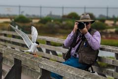 Photographer and Tern (Jose Matutina) Tags: bird bolsachica california forsterstern huntingtonbeach orangecounty photographer sel70300g sonya6500 southerncalifornia tern