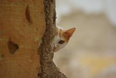 hide and seek (nothinginside) Tags: hide seek nascondino meknes marocco 2017 gatto gato cat kitty pet suq suk medina somewhere