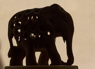 Macro of an Elephant (explored 5th June 2017)