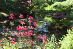 IMG_0492 (Don Duedos) Tags: japanese garden den haag holland flowers park clingendael nature hague