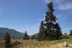 Knox Mountain Trail, Kelowna BC (nikname) Tags: lakeokanagan kelownabc knoxmountaintrail kelownabccanada bcparks trees