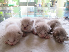(meidiancitra) Tags: cats cat babycat