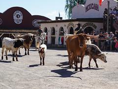 Westernstadt Pullman City Harz (ingrid eulenfan) Tags: westernstadtpullmancityharz hasselfelde erlebnispark abenteuer indianer cowboy rinder show