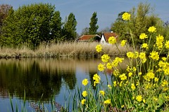 DSC05616 (hofsteej) Tags: middendelfland holland vlaardingervaart netherlands vlaardingsekade broekpolder april