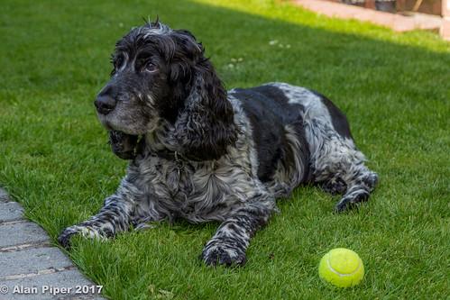 Buddy with ball