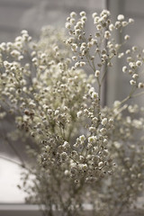The Distance Between Us Pt. I (Miss Marisa Renee) Tags: marisarenee digital canon flowers floral babys breath 2016 december december2016 diptych two part vertical distance shallowdepthoffield canon5dmarkii