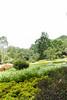 IMG_4397 (翔志) Tags: taiwan taoyuan fuxing shanggaorao valley garden taoyuanhsienku 桃源仙谷