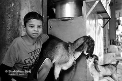 New Hope (shahjahansiraj.com) Tags: bangladesh child goat refugee pakistani bangladeshi boy potrait poor rights citizenship hope newhope determination vision dhaka geneva camp camplife slumdweller