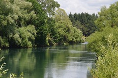 Willows & Water (bevanwalker) Tags: trees fish trout eels wlliows sky deep fresh healthy icecold greenery lush reflection