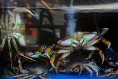 Crabs in the tank (Xu@EVIL Cameras) Tags: wollensak raptar 50mm f2 lens head