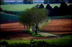 Chemiré le Gaudin (Sarthe) (gondardphilippe) Tags: chemirélegaudin sarthe maine paysdelaloire