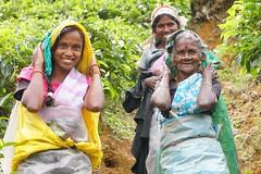 Sri Lanka, tea pickers (40) (walterkolkma) Tags: srilanka tea pickers teapickers centralhighlands nuwaraeliya strathdon teaestates women laborers tamils sonya6300