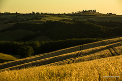 Tuscan Hills (aryanphotography) Tags: illuminate anthonyrryan anthony landscape sunset anthonyryan italy hills cypresstree tuscany warm scenic valdorcia outdoors farm sanquiricodorcia goldenhour nature goldenfields