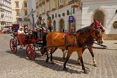 Vienna / Carriage ride / Michaeler platz (Pantchoa) Tags: vienne autriche calèche promenade michaelerplatz chevaux touristes nikon d7200 18140 bonjour pavés tradition chapeau attelage photoderue streetshot