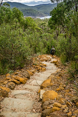 Lots of steps down (NettyA) Tags: 2017 3capestrack australia sonya7r tasmannationalpark tasmanpeninsula tasmania tassie threecapestrack bushwalk bushwalking day4 hike steps stairs stone