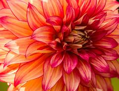 DIMY J17 8835 (Carolina explorer photographer) Tags: charleshardin charleskhardinphotography floral flowers outdoorsphotography sc southcarolina httpswwwfacebookcom httpswwwflickrcomphotos51814359n06