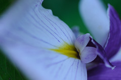 20170611_Jardins_Secrets_Vaulx_Fl (11 sur 23) (calace74) Tags: rhonealpes fleurs france jardin jardinssecrets macro
