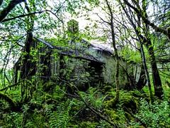 ABANDONED COTTAGE, DUMFRIESSHIRE (pajacksonartist) Tags: old abandoned cottage derelict drumlanrig castle dumfriesshire