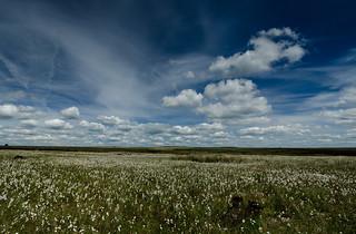 Summer on the Moors