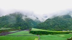Smoky Mountain (Jimweaver) Tags: mountain taiwan yilan fog woods forest cloudy field farm house wet green path vegetable 高麗菜 宜蘭 米羅山 泰雅 農場 田 霧 綠 濕 雲 asia 亞洲