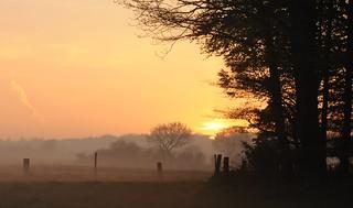 Lichtspiele - morgens beim Weiden-Check; Bergenhusen, Stapelholm (3)