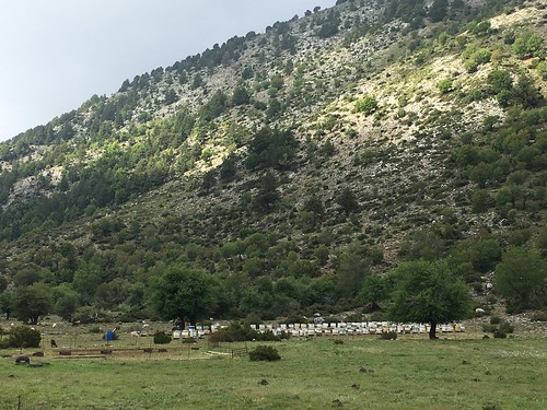 Beehives on the Omalos Plateau