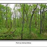 Andreas Kalbow Landschaft 2017.05.24 Fischland Darß (12) thumbnail