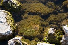 Водоросли (akk_rus) Tags: 2470 28 nikkor nikkor247028 nikon d800 nikond800 prespa lake macedonia македония преспа озеро преспанско езеро преспанскоезеро prespasee