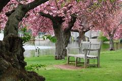 Happy bench Monday! (NataThe3) Tags: blossom bench nature park spring
