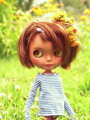 sun@flowers
