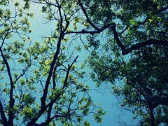 the beauty of nature. (brooki.cooki) Tags: brookiecookiemakesmemories the beauty of nature entangled love
