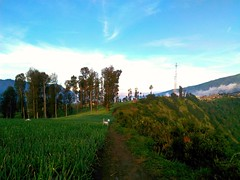 Mount Bromo and surroundings, 6th pics...The Ambience. (Alvin Gunawan) Tags: mountainambience mountainscenery mountbromo theprivatetourcom beautifulview mountainlovers mountainview scenery theprivatetourindonesia skyviewers