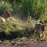 DSC06988 - NAMIBIA 2017 thumbnail