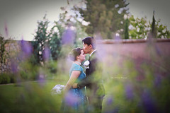 Christina & JuSeung (Kelly McCarthy Photography) Tags: man woman couple wedding flowers kiss love romance bokeh outdoors purple teal dress bouquet bride groom catchycolorsteal blue romantic photography photoshoot happilyeverafter