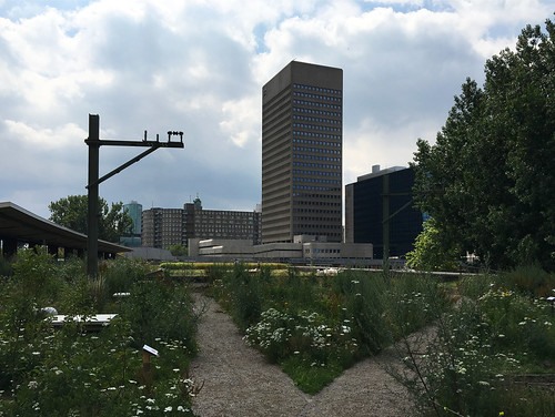 Rooftop Rotterdam Farming