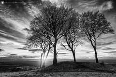Seven Sisters round barrow, Copt Hill (Silent Eagle  Photography) Tags: sep silent eagle photography bernacer silenteaglephotography hill copthill sevensistersroundbarrow bw mono sunray sky tree landscape outdoor silenteagle09 clouds shadows northeast seaham