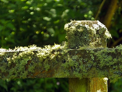 Lichen on a Fence (Cornishcarolin. Problems posting thanks xxx) Tags: cornwall penryn glasneyvalley lichen plants fence fungi 1001nights 1001nightsmagiccity