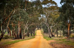 Down the road (holly hop) Tags: road dirt bush gumtrees 100xthe2017edition abctvweather australia centralvictoria emu farm rural