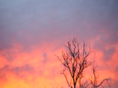 That Thing You Do With Your Eyes (Rantz) Tags: australia australiancapitalterritory canberra cloud clouds dikaiosyne rantz sky tree trees