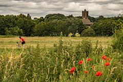 Rainford (ianbonnell) Tags: rainford merseyside sthelens england poppy poppies cyclist