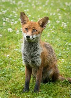 fantastic mister fox 03 jun 17