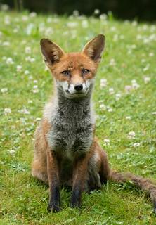 fantastic mister fox 01 jun 17