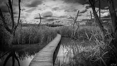 Creepy (Phil Vb) Tags: chemin marecages landscape lac roseaux ciel nuages creepy bw blackandwhite noiretblanc décor philvb nikon way water bridge