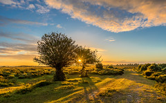 Tree Flare (nicklucas2) Tags: newforest landscape sun sunrise cloud tree flare path shadow
