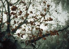 img331 (Robyn Sewell) Tags: film nikon nikonfe tree leura colour ektar100