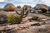cactus e pedras (Helvio Silva) Tags: cacto mandacaru lajedo pedreira pedras rochas semiárido paraiba cabaceiras paimateus nordeste brasil rocks helviosilva