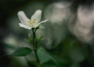 White _