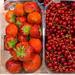 Erdbeeren und Johannisbeeren