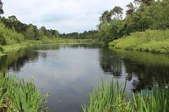 "Oisterwijk: Lake ""Groot Aderven"" (♥ Corry ♥) Tags: water lake forest fen trees spring green nature landscape reflections meer ven bos bomen lente groen reflecties natuur landschap dutch netherlands holland nederland oisterwijk canon"